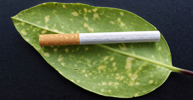 cigarette and leaf